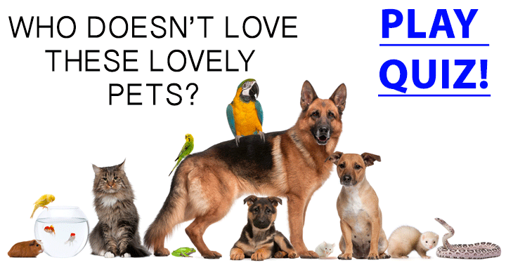 Who doesn't love these lovely pets?