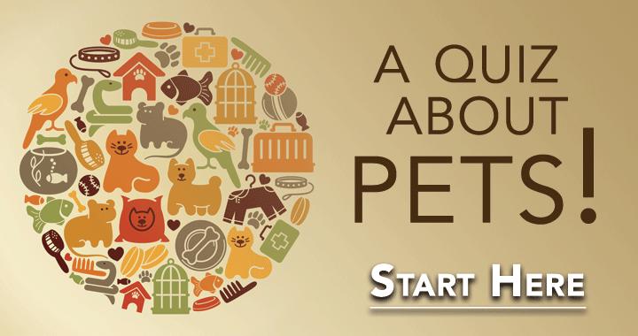 A Quiz About Pets!