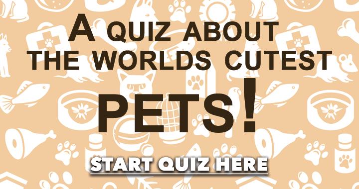 Cutest Pets Quiz