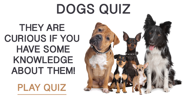 Quiz about dogs!