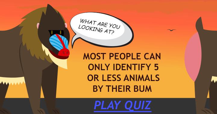 Animal bums