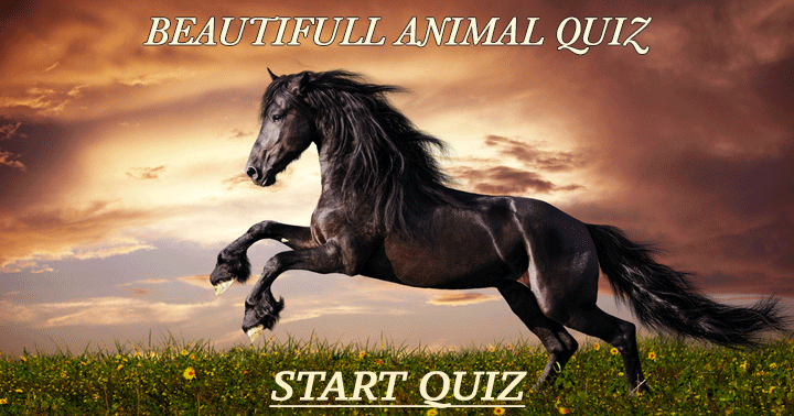 Can you get a decent score in this quiz?