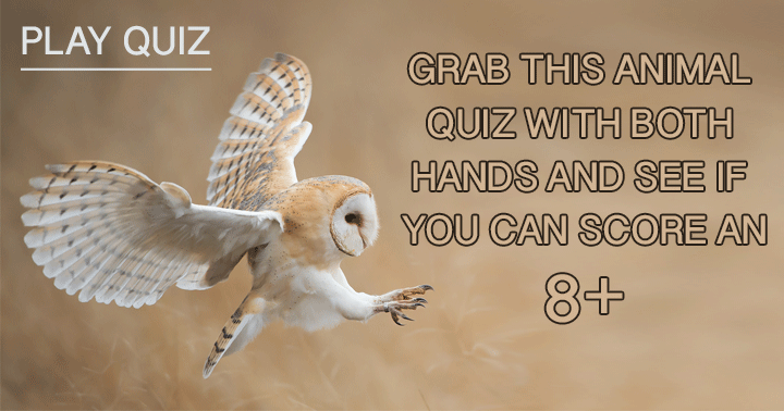 Grab this quiz with both hands and show everybody how good you are!