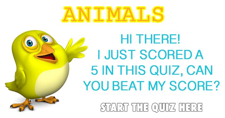 Animal Quiz.